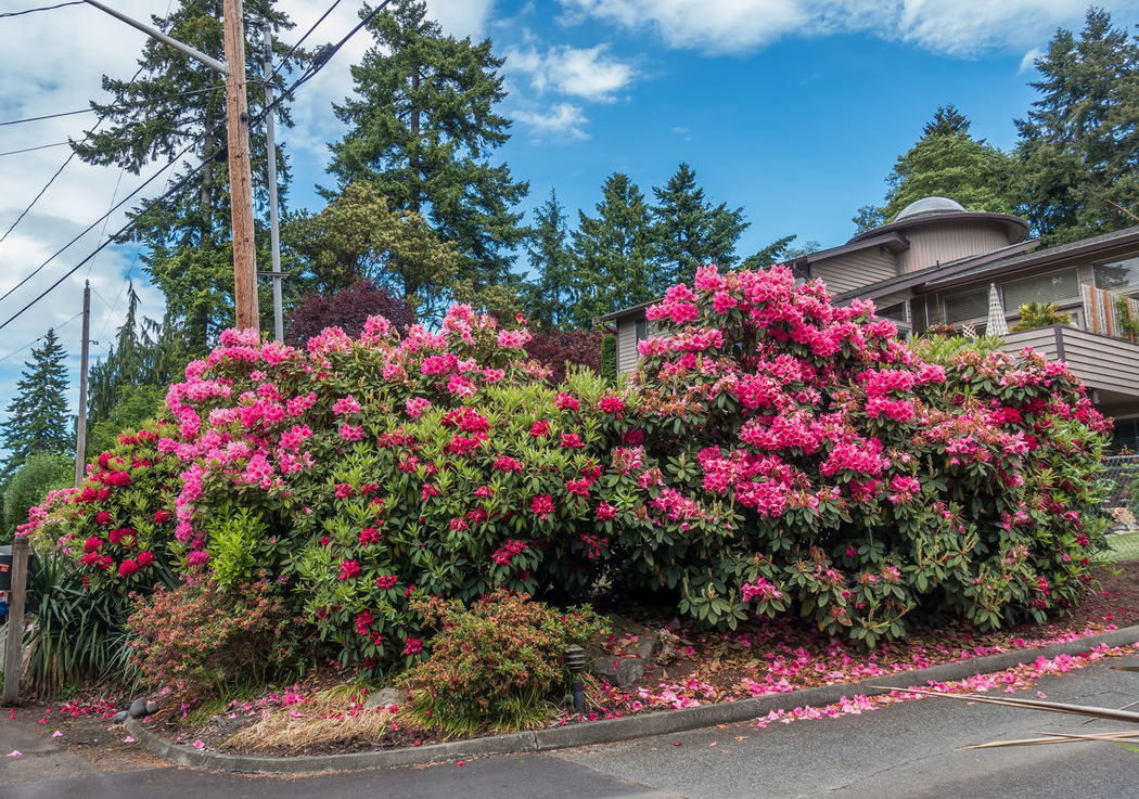 Neighborhood flowers Blosssom Noramandy Park Architecture Beauty In Nature Building Exterior Built Structure Day Flower Fragility Growth Large Group Of People Nature No People Outdoors Plant Road Sky Spring Tree