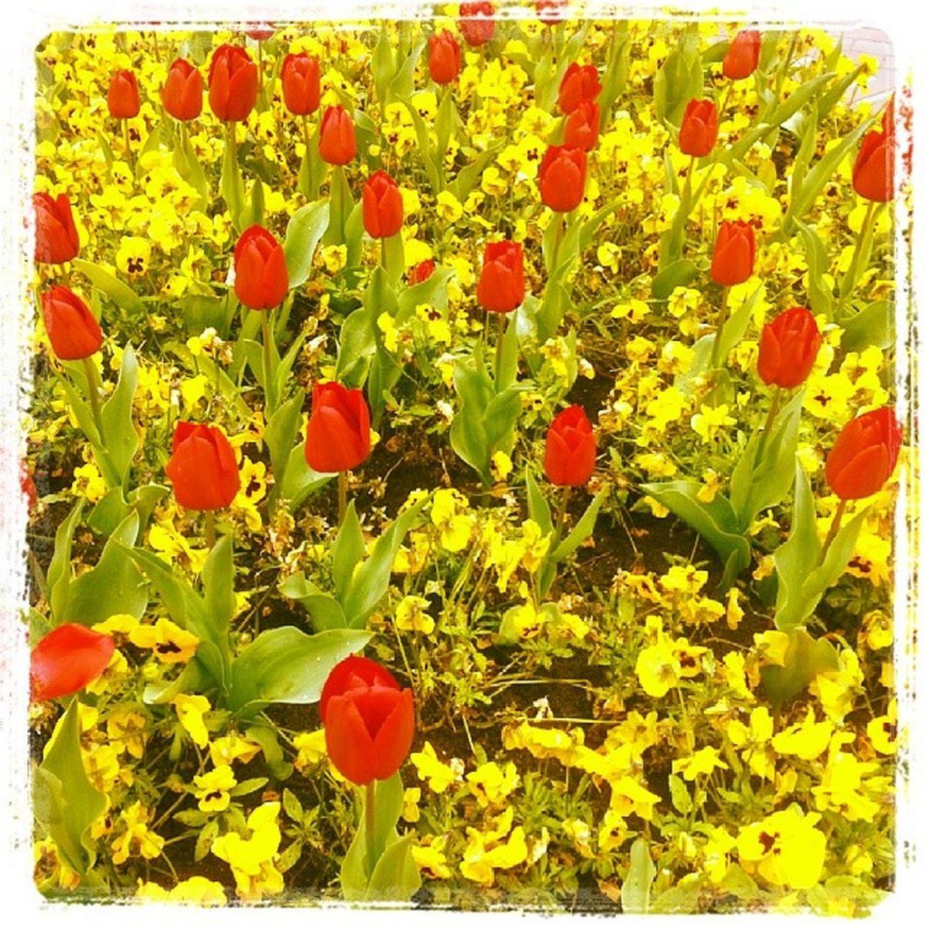 Blumen Papenburg