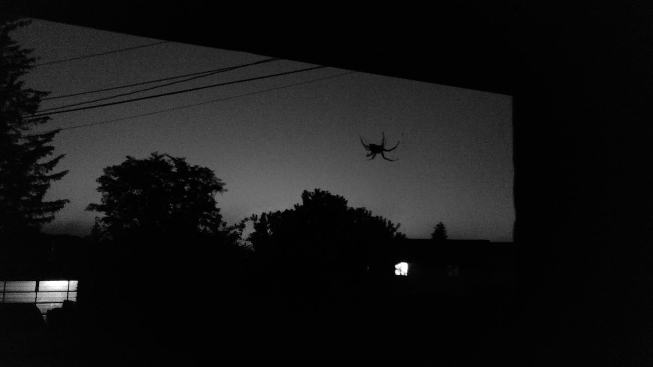 Blackandwhite Photography Silhouettes Spiderworld Spiders Spider Silhouette Crafty Check This Out Taking Photos Balance And Composure