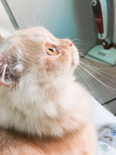 김뽀실이 Cat Close-up Pets One Animal Animal Themes Domestic Animals Domestic Cat Part Of Mammal Whisker Feline Looking Away Curiosity Animal Head  Alertness Focus On Foreground Zoology Animal Hair Whiskers Animal Nose First Eyeem Photo