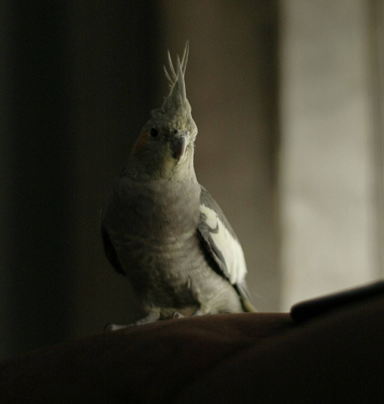 The Purist (no Edit, No Filter) EyeEm Best Shots Mi Pollo Y Yo Relaxing