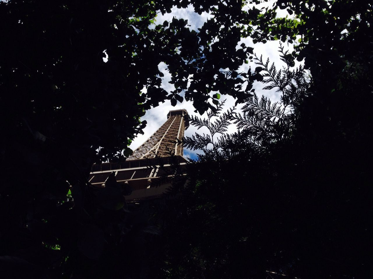 Low Angle View Of Eiffel Tower Seen Through Trees
