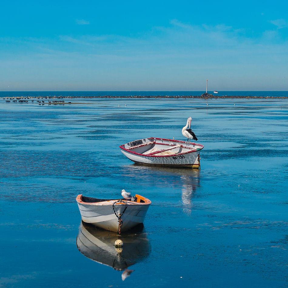 Blue Boat Horizon Over Water Nature Pelican Sea Seagull Seashore Sky Sunshine Water Blue Wave