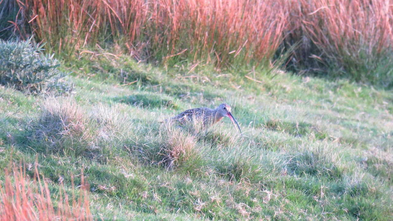 Eye4photography  Landscape Outdoors Beauty In Nature Animal Themes No People Curlew