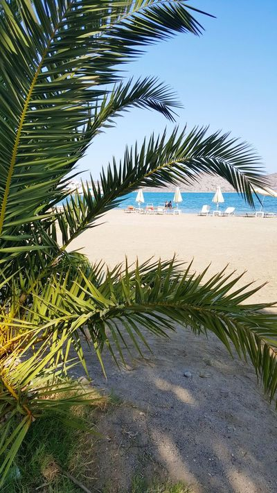 Palm Tree Nature Water Beach Sea Beauty In Nature Sand Scenics Sky Relaxation Elounda Vacations Kreta Crete Griechenland First Eyeem Photo Best EyeEm Shot EyeEmBestPics Greek Landscape Sunny Clear Sky