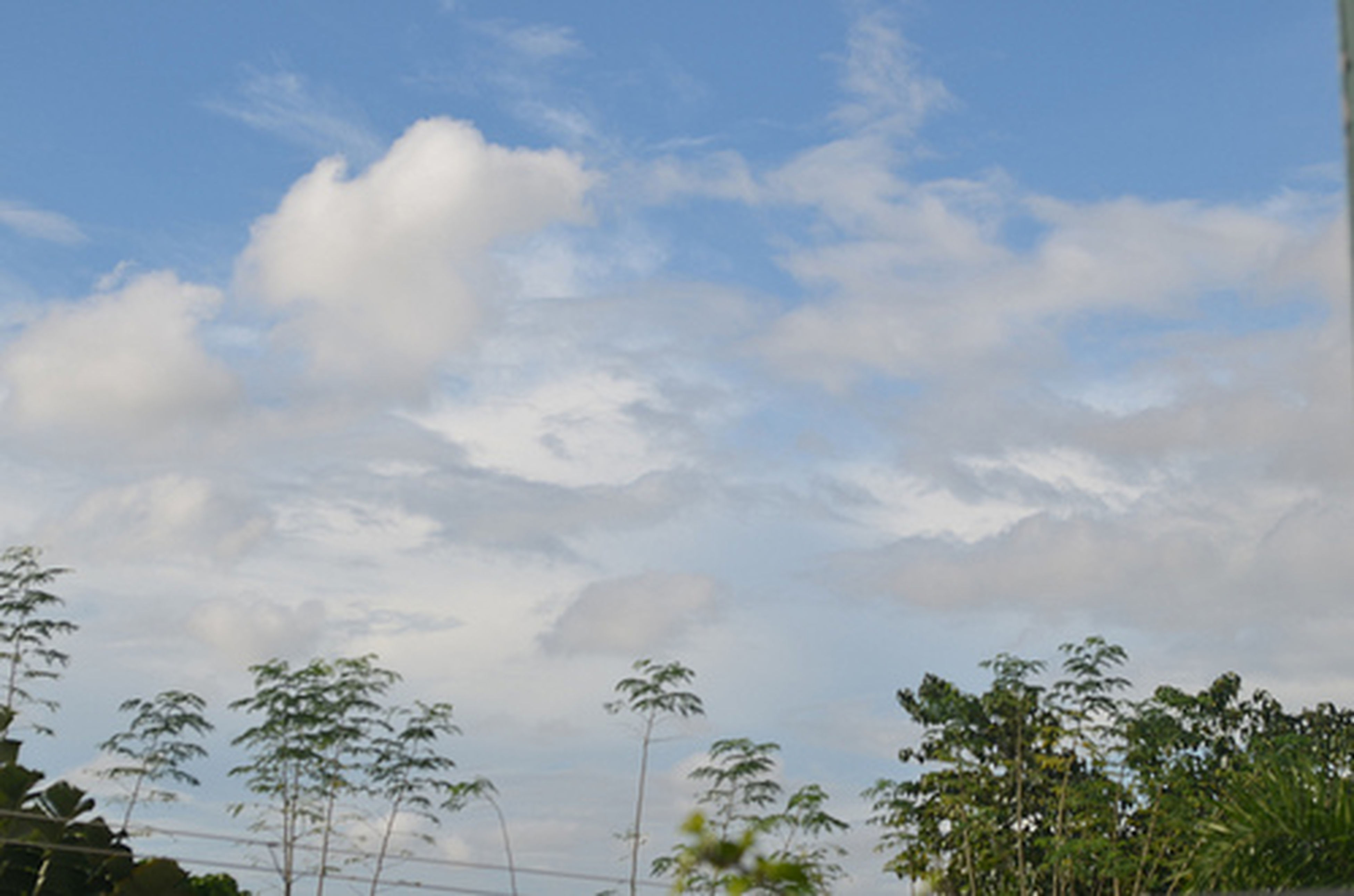 sky, tree, cloud - sky, low angle view, cloudy, tranquility, cloud, beauty in nature, nature, scenics, growth, blue, tranquil scene, day, outdoors, no people, palm tree, idyllic, high section, sunlight