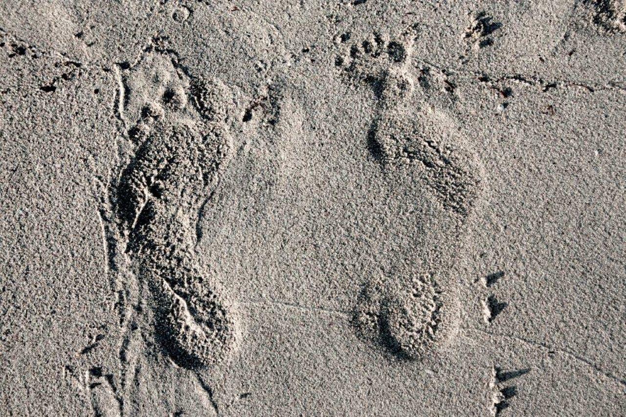 Fingerprints Sea Life Sabbia Impronte