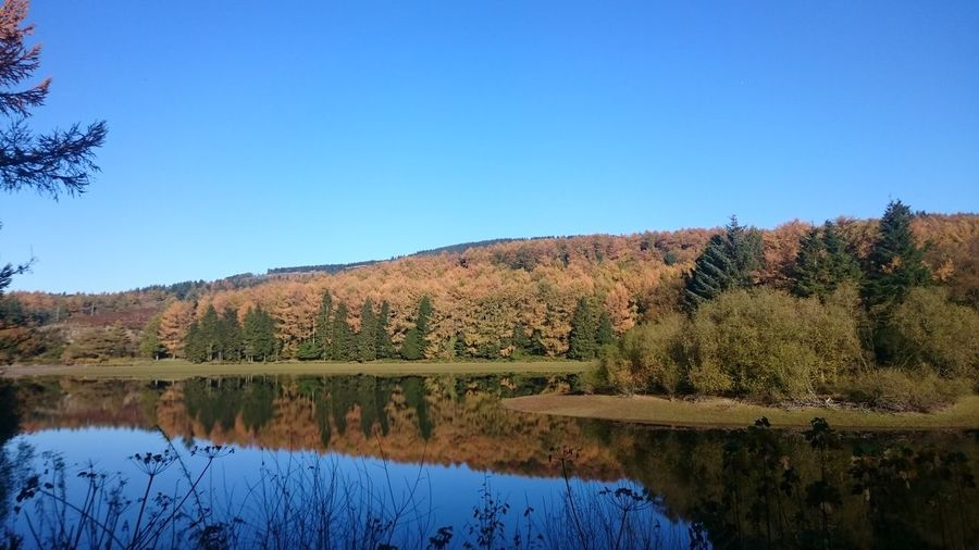 Reflection Tree Blue Nature Lake Scenics Beauty In Nature Clear Sky Outdoors No People Water Day Sky Reservoir Macclesfield Forest