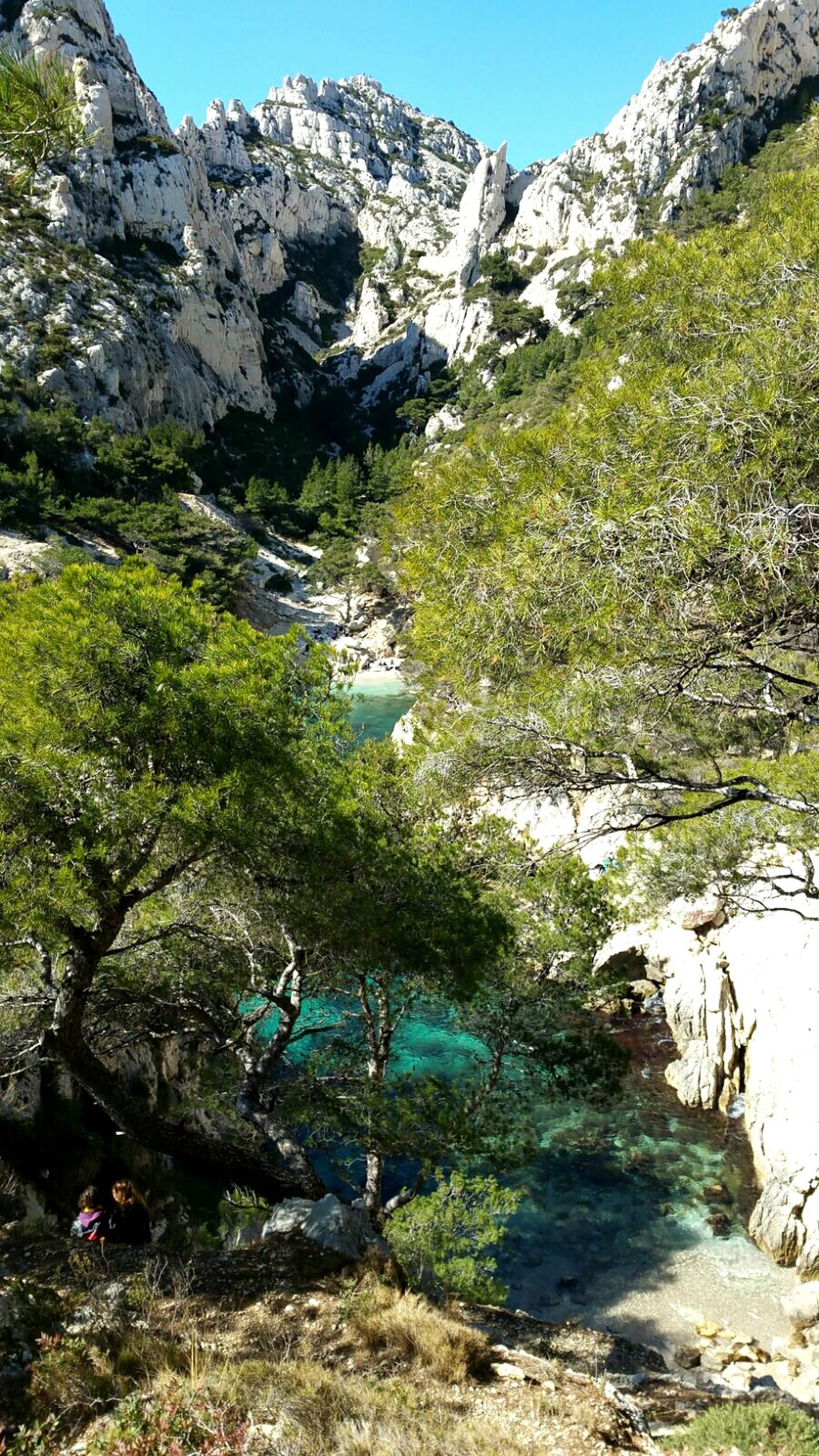 Tree Nature Outdoors Pin Parasol Blue Water Nature Beauty In Nature Calanques De Marseille Tranquility Tranquil Scene Landscape France No People Water Bouches Du Rhone PACA Marseillecartepostale Marseille Blue Mountain Sunlight Day Beauty In Nature Idyllic