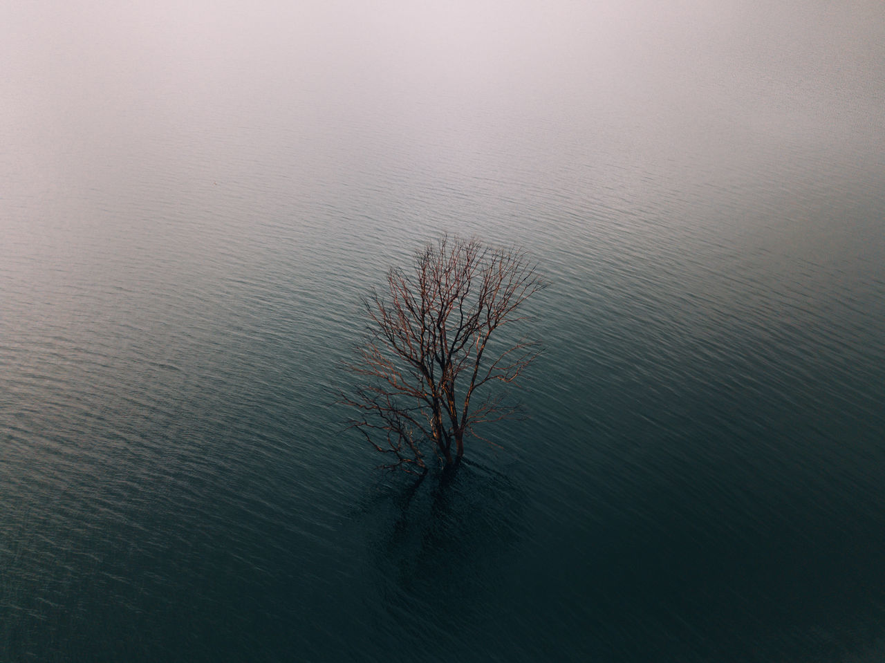 A lone tree sits in the waters of Chaffey Dam, Australia Australia DJI mavic pro Eye Em Nature Lover Lone Tree Red bare tree beauty in Nature branch day eye em best shots Isolated landscape lone mavic pro Nature no people outdoors scenics tranquil scene Tranquility Tree week on eyeem
