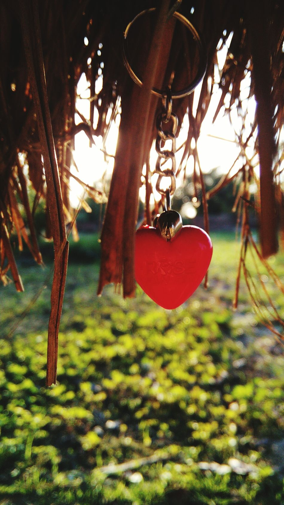 Love Nature Leaves Focus Heart Chain 43 Golden Moments Morning Morning Light Village Hometown Picofthemonth Brijesh Photography