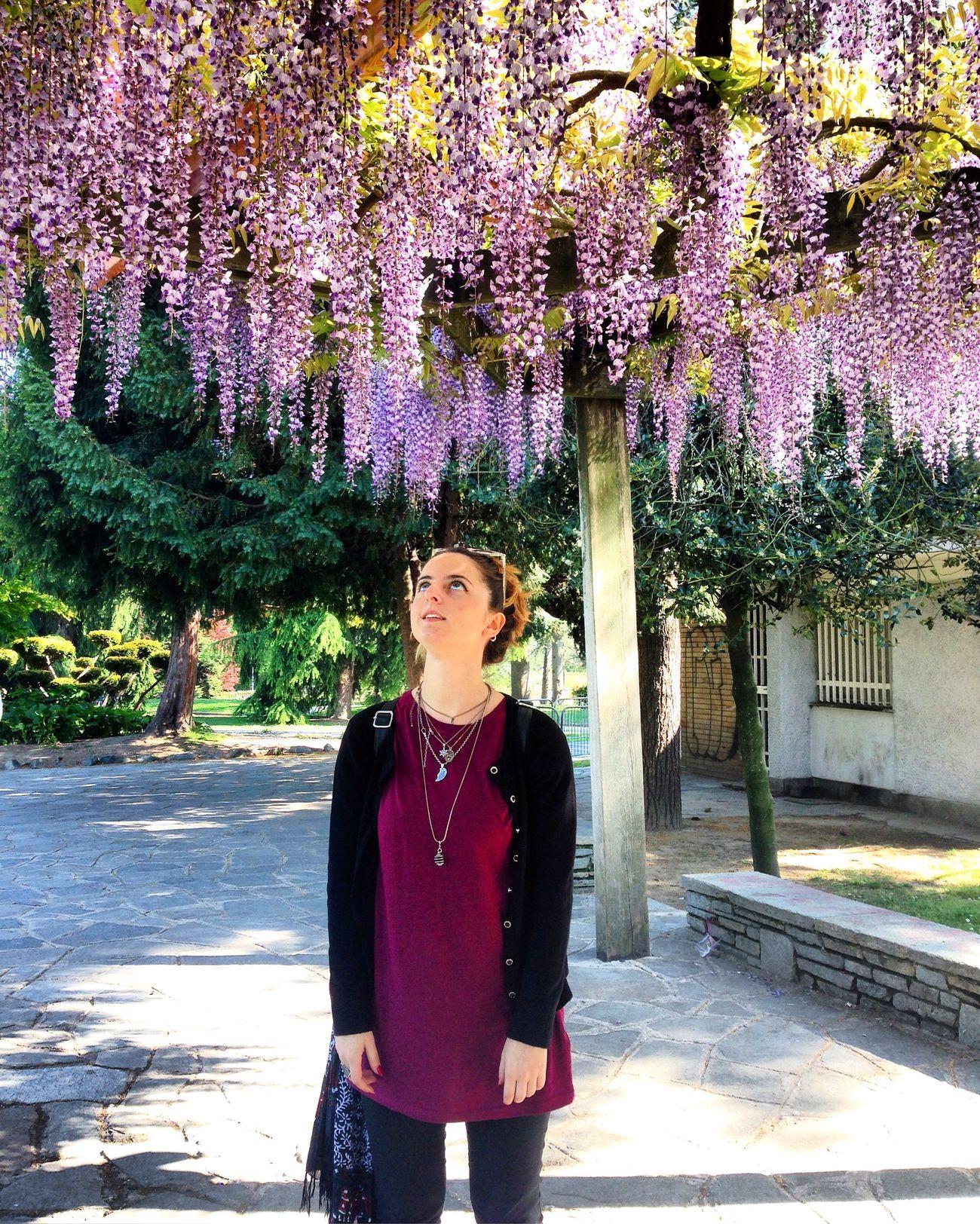 Pioggia color glicine Flower Tree Glicine Wisteria Love Landscape Nature Torino Italy Beautiful Beauty In Nature Colors Sweet Landscape_Collection Happy Good Times Friends Girl Italian Purple