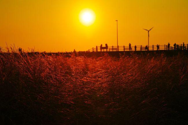 가을 억세 Sunset Alternative Energy Electricity  Wind Turbine Landscape Agriculture No People Nature Sun Outdoors Renewable Energy Sky Day