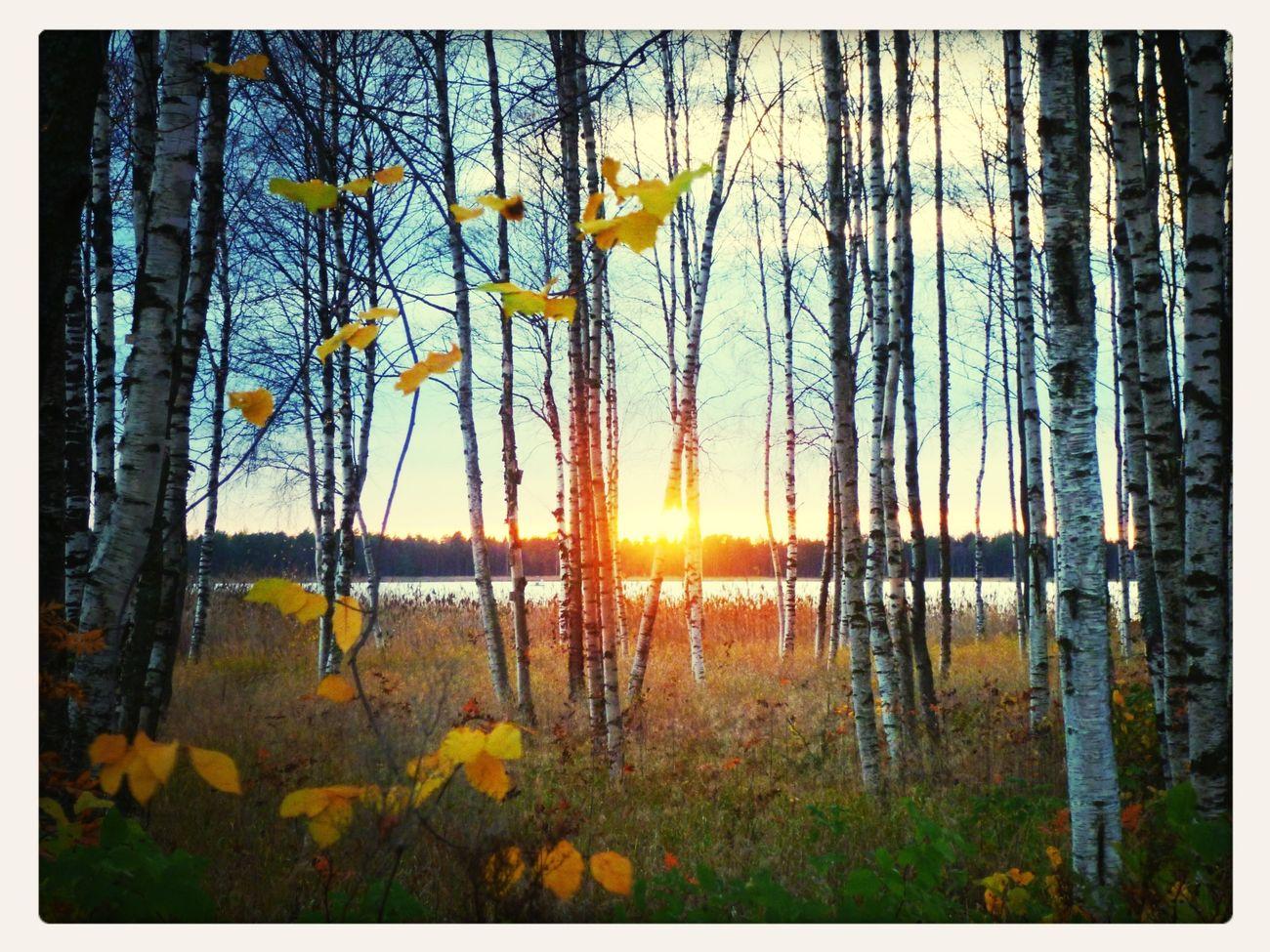 Kuivasjärvi Nature Sunset Near And Far Finland