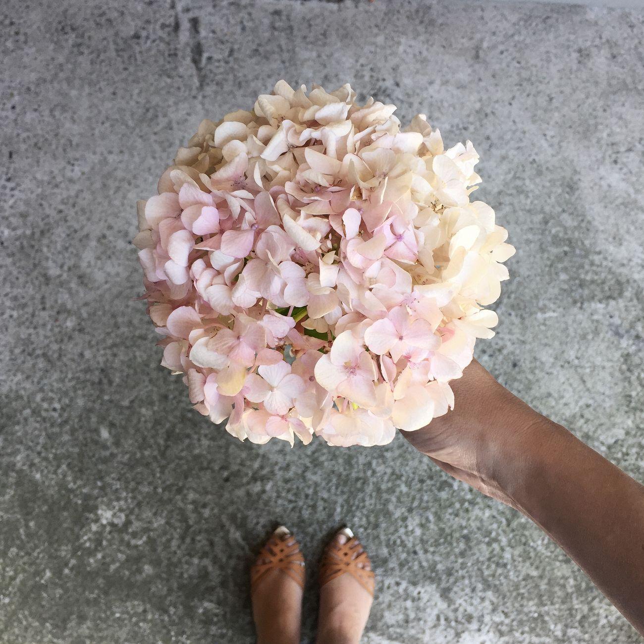 Photo-shoot aftermath. Flowers Taking Photos Hydrangea Flowerporn Bunch