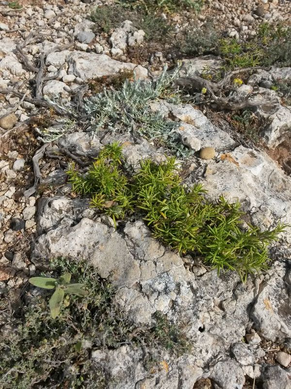 Day High Angle View Outdoors Nature No People Plant Sand Green Color Close-up Growth Beach Grass Fragility Beauty In Nature Mediteranean Mediterranean Nature Stone Garden Plants Collection Plants And Stones Rosmarin Rosmarino Thyme