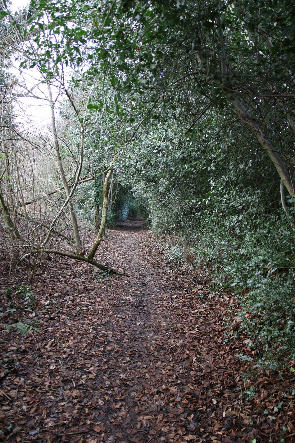 Backgrounds Beauty In Nature Bridleway Close-up Countryside Day Footpath Leaves Nature No People Outdoors Sky Surrey Countryside Track Tree Walking