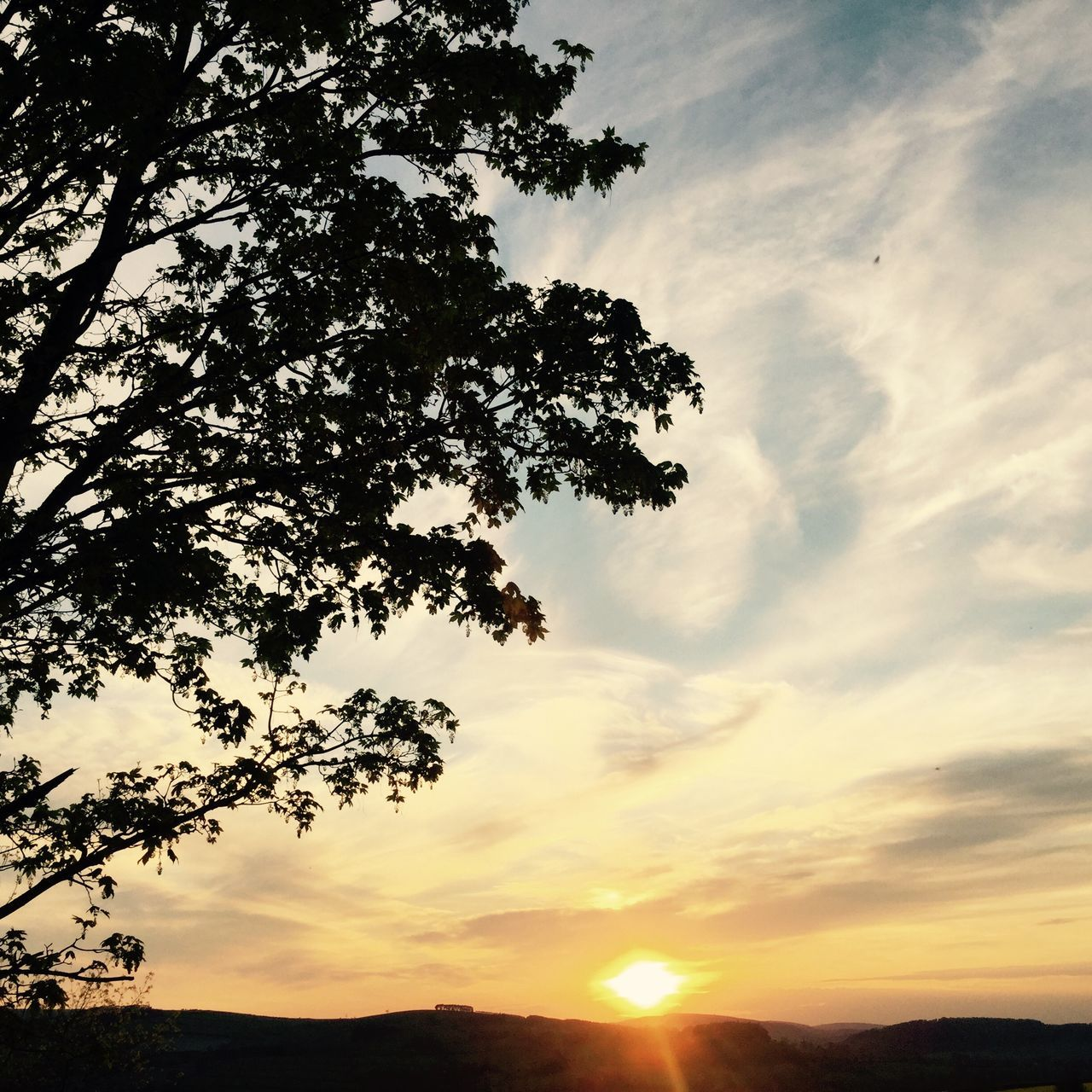 sunset, tree, beauty in nature, sky, nature, scenics, low angle view, sun, cloud - sky, tranquil scene, tranquility, silhouette, no people, outdoors, growth, branch, day