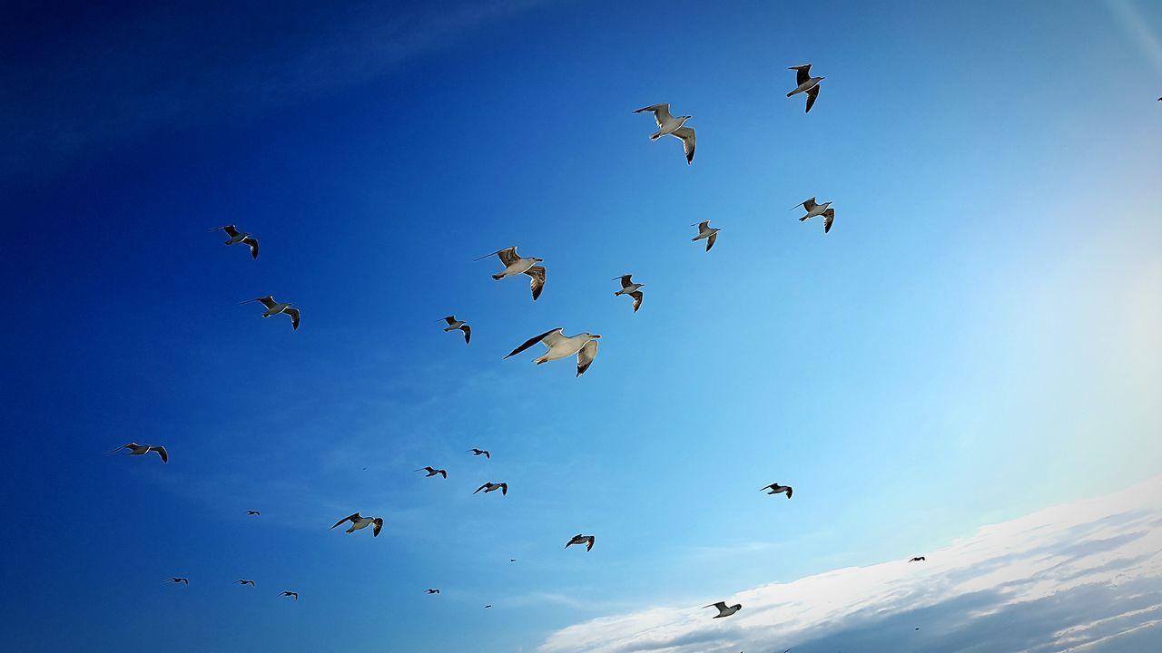 Gulls And Sky Gulls In Flight Seagulls And Sea Seatrip Izmir Turkey EyeEm Best Shots