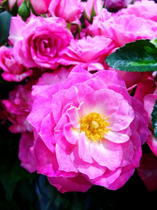 Flowers Taking Photos Flower Nature Pink Flower Check This Out Holiday 꽃박람회