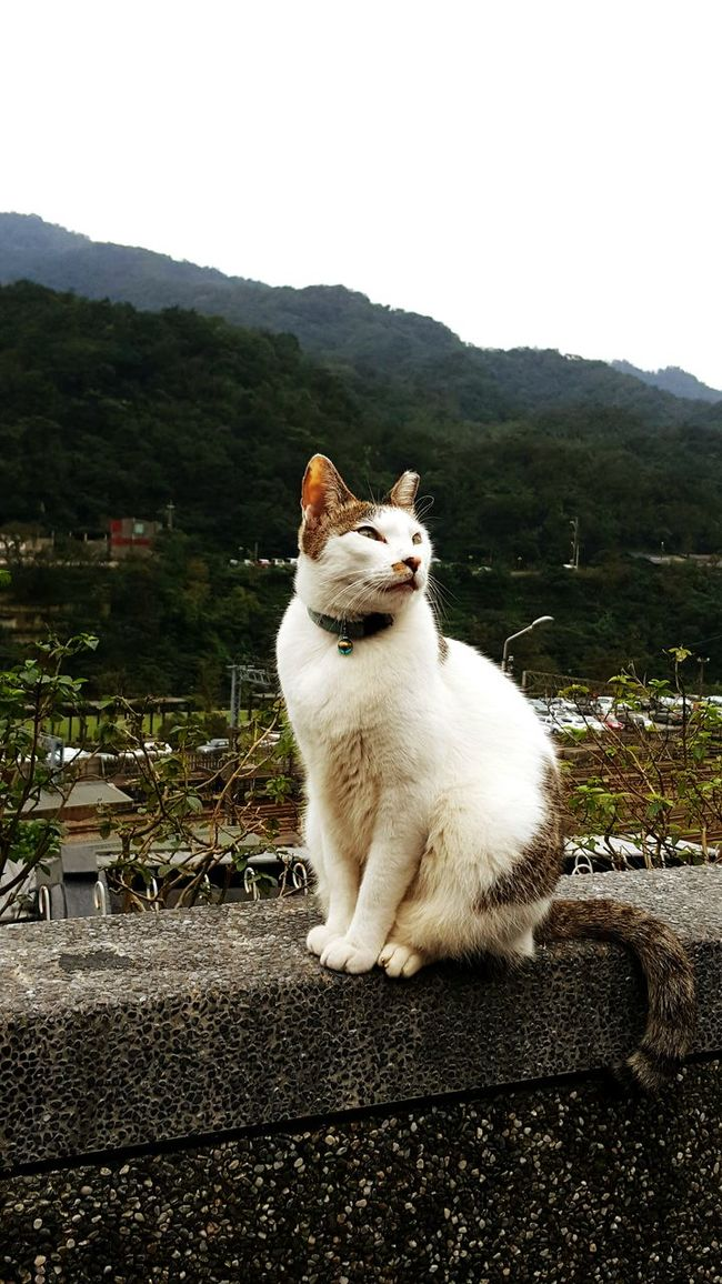 Cat Weekend Relaxing Traveling Animals Cat♡ Taking Photos EyeEm Best Shots Beautiful Day 猴硐貓村 People Watching