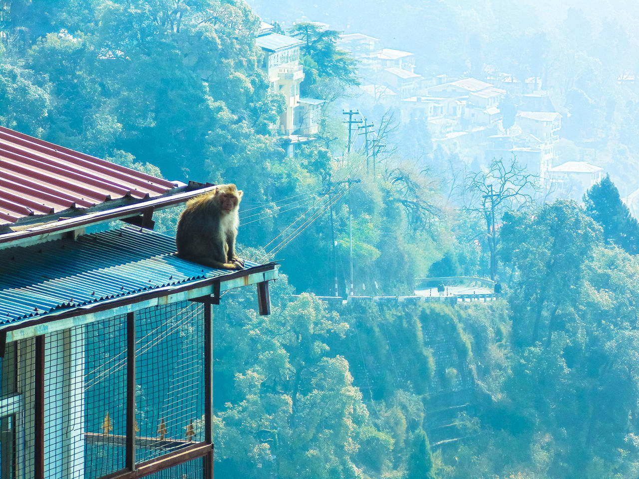Beautiful stock photos of monkey, Animal Themes, Animal Wildlife, Animals In The Wild, Architecture