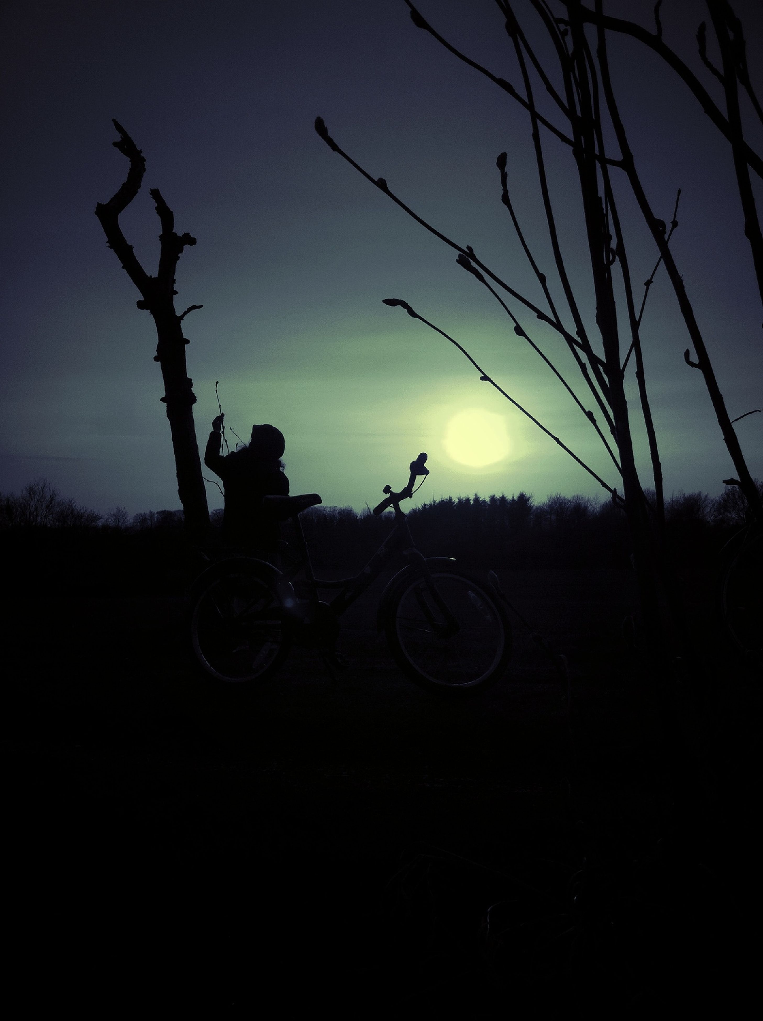 silhouette, bare tree, transportation, bicycle, sky, tree, land vehicle, landscape, sunset, field, tranquility, tranquil scene, mode of transport, clear sky, nature, scenics, outdoors, copy space, dusk, beauty in nature