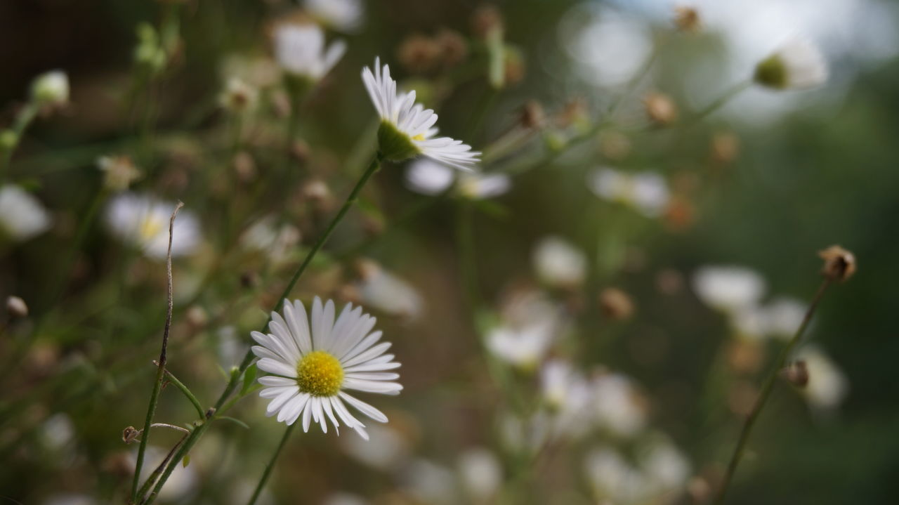 Flower Nature Beauty In Nature Beautiful Outdoor Life Outdoor Photography Naturelovers
