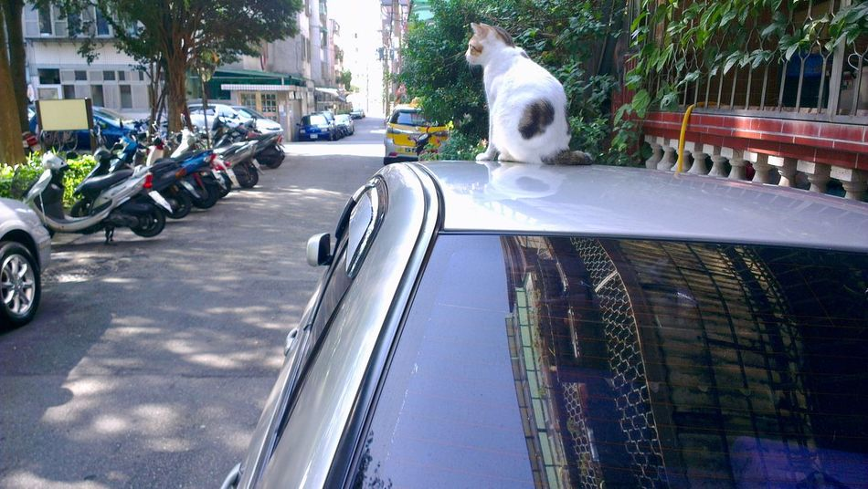 Alley Cat Alley Scene Alleyways Animal Themes Car One Animal Perching Cat Pets