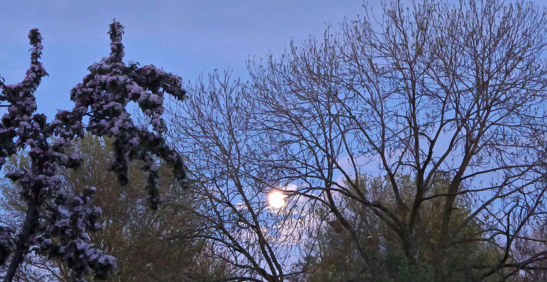 Maan  Luna Tree
