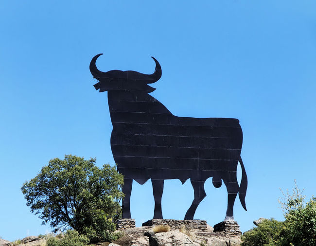 typical black bull along the spanish roads, extremadura region Black Bull Blue Bull Clear Sky Extremadura Sky Spanish Tree