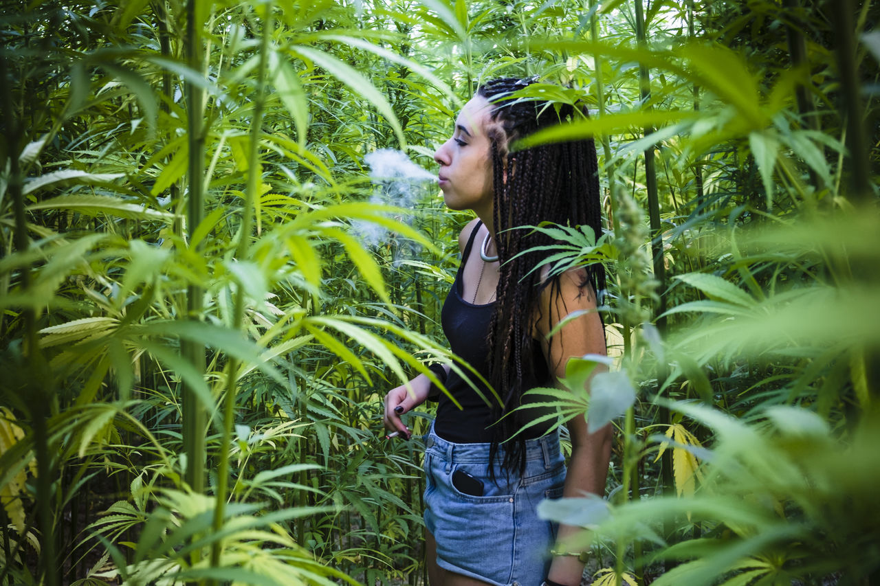 Cannabis Smoking Adults Only Beautiful Woman Casual Clothing Grass Green Color Growth Leaf Leisure Activity Lifestyles Marijuana Marijuana - Herbal Cannabis Nature One Person One Young Woman Only Only Women Outdoors People Plant Real People Side View Standing Women Young Women