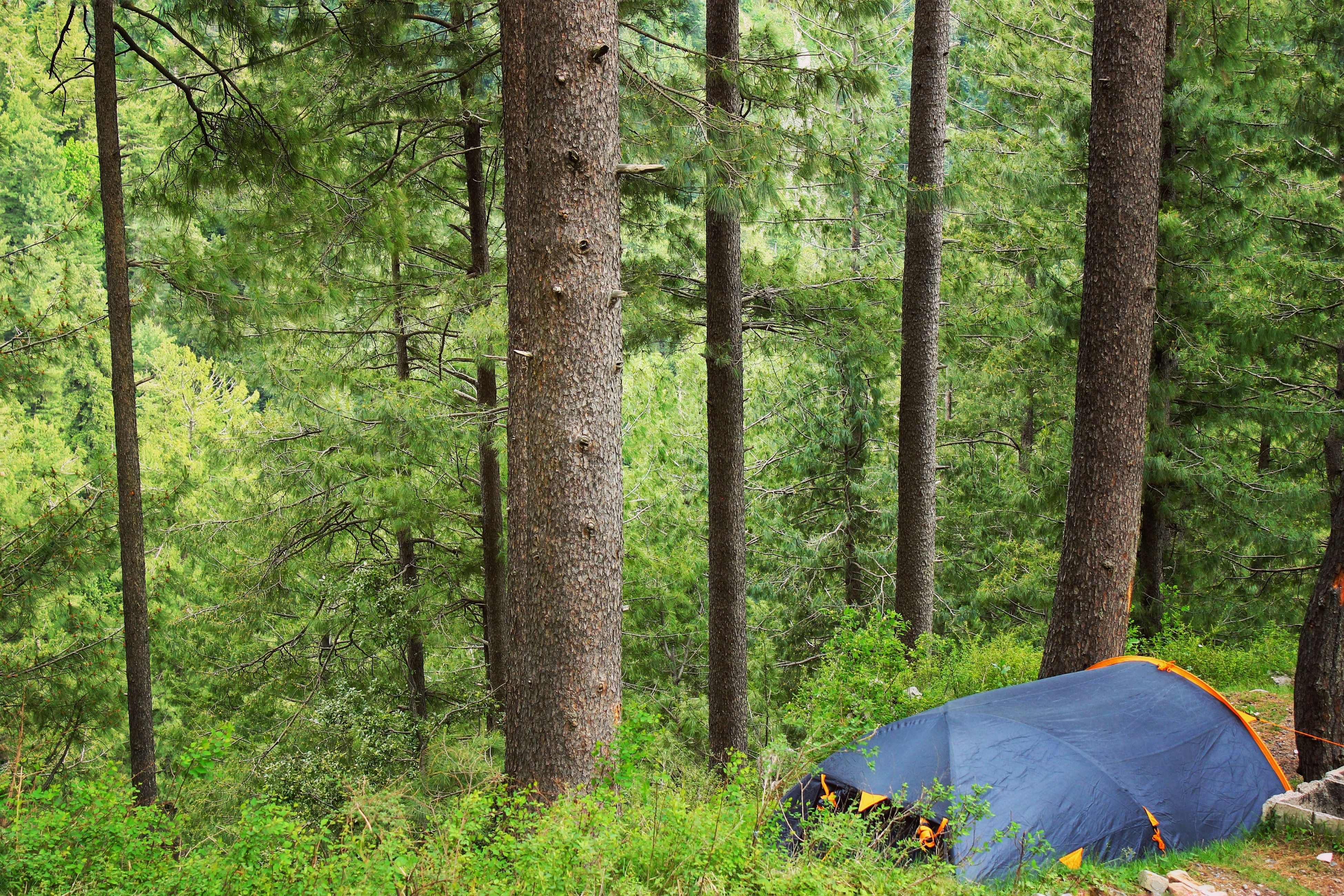 camping, tree, tent, forest, nature, beauty in nature, green color, woodland, pine tree, scenics, day, tranquility, landscape, outdoors, grass, no people, shelter, sky