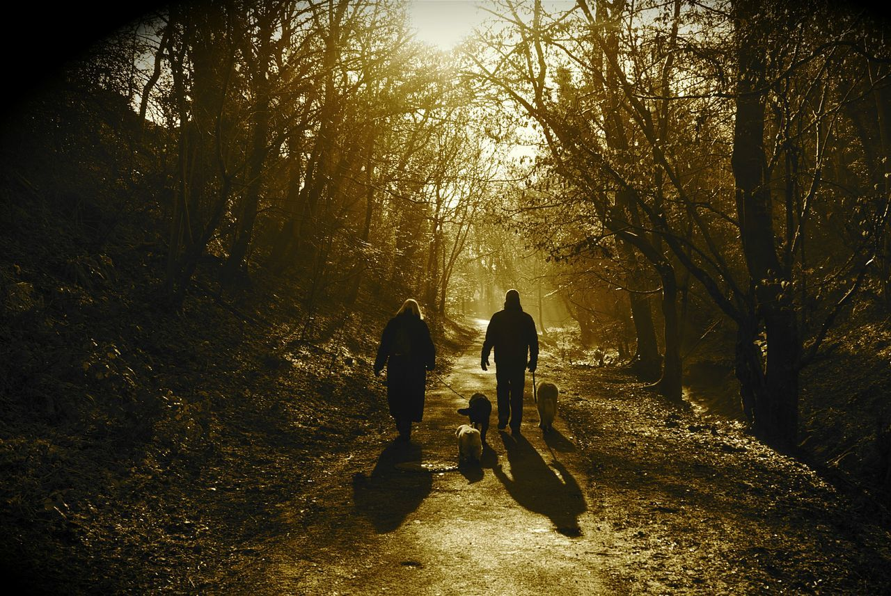 Dog Walking in the Woods 🐕🌲🌳 Two People Silhouette Shadow Sunlight Real People People Full Length Togetherness Outdoors Adult Day Adults Only Water Nature Walkers Pets Pet Care Tranquil Scene Couple Family Life Couple Life Relaxing Walk In The Woods