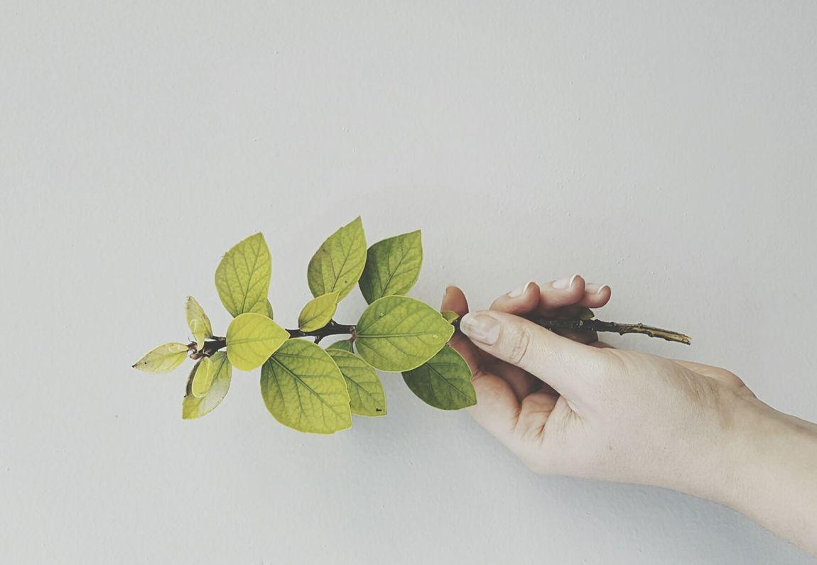 Human Hand Human Body Part Close-up Branch Freshness Plant Gardening Close-up Leaf Botanic