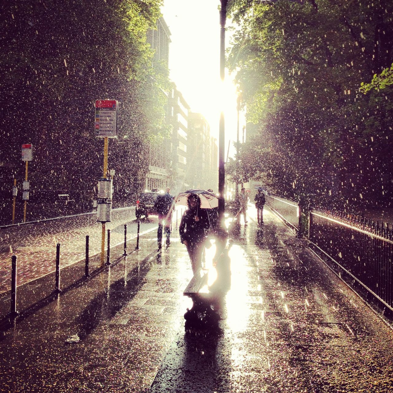 street, wet, weather, the way forward, real people, walking, full length, architecture, outdoors, built structure, city, sunlight, road, building exterior, water, men, sky, nature, tree, mammal, people