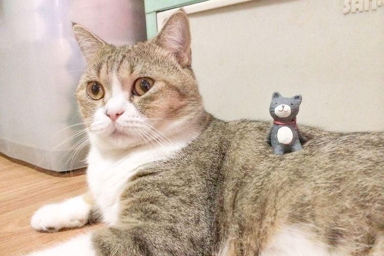 Giant and tiny cat.hahaha Cat Cute Cats Kitten