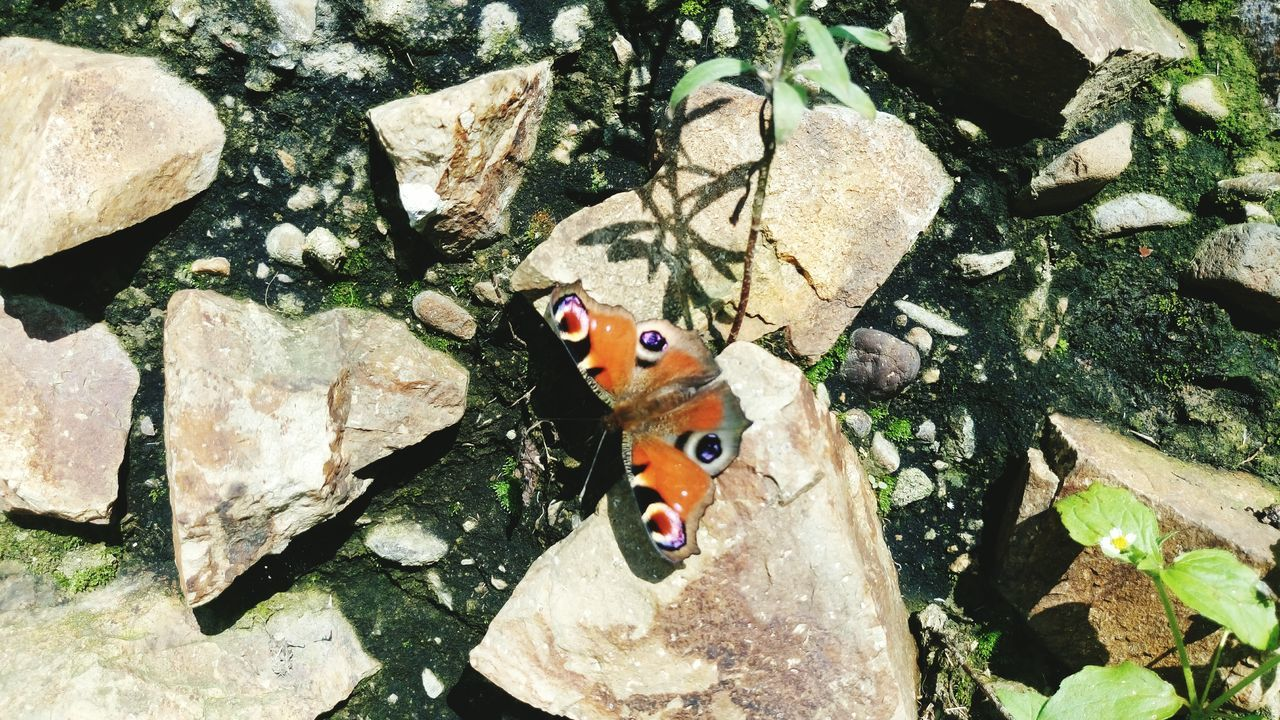 Beautiful stock photos of schmetterling, high angle view, no people, animal themes, outdoors