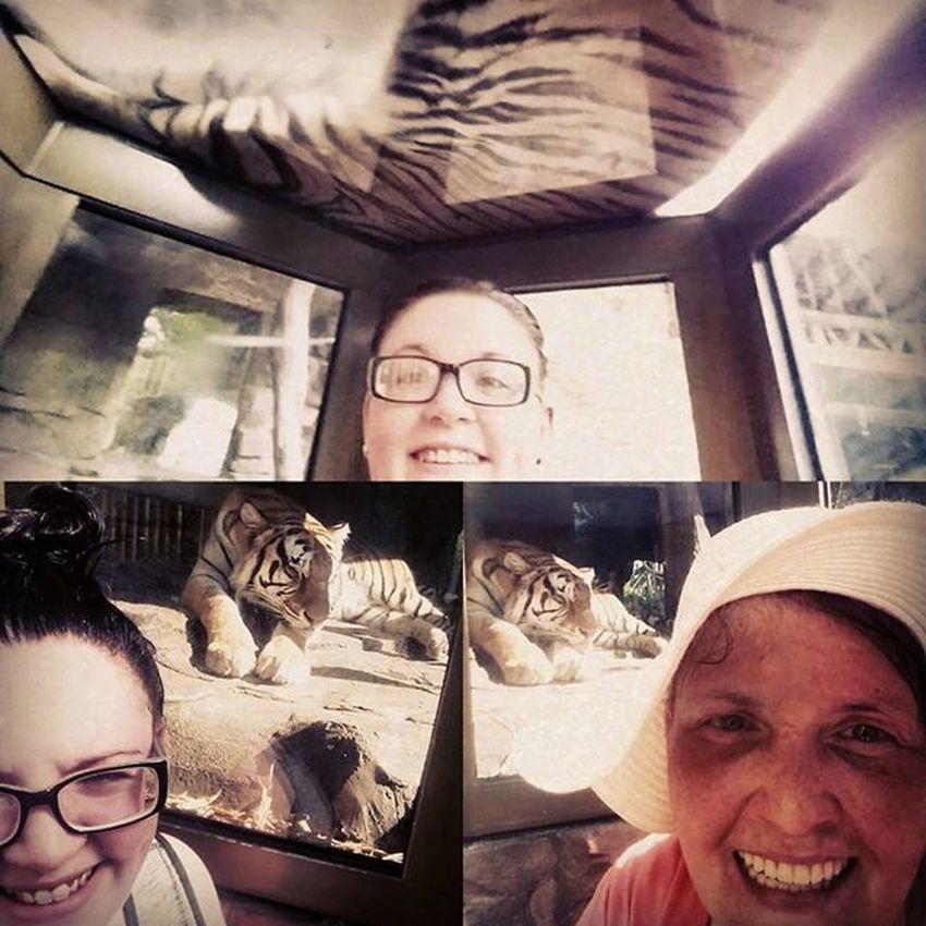 Mom and me getting selfies with tigers at Buschgardenstampa Throwback Bestmomever Iloveyou Beautiful Selfies