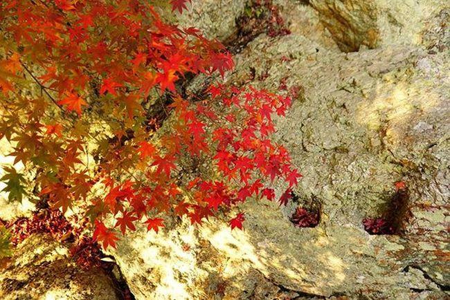 🍁(๑´ڡ`๑)🍁 . Travelgram Nofilter 南禅寺 Kyotowalk Kyoto Japan 😚 😚 もみじ 紅葉 紅葉狩り Red Yellow 京都 東山 ColorsOfAutumn Fall Autumn Autumnlove Fallenleaves Fallingleaves