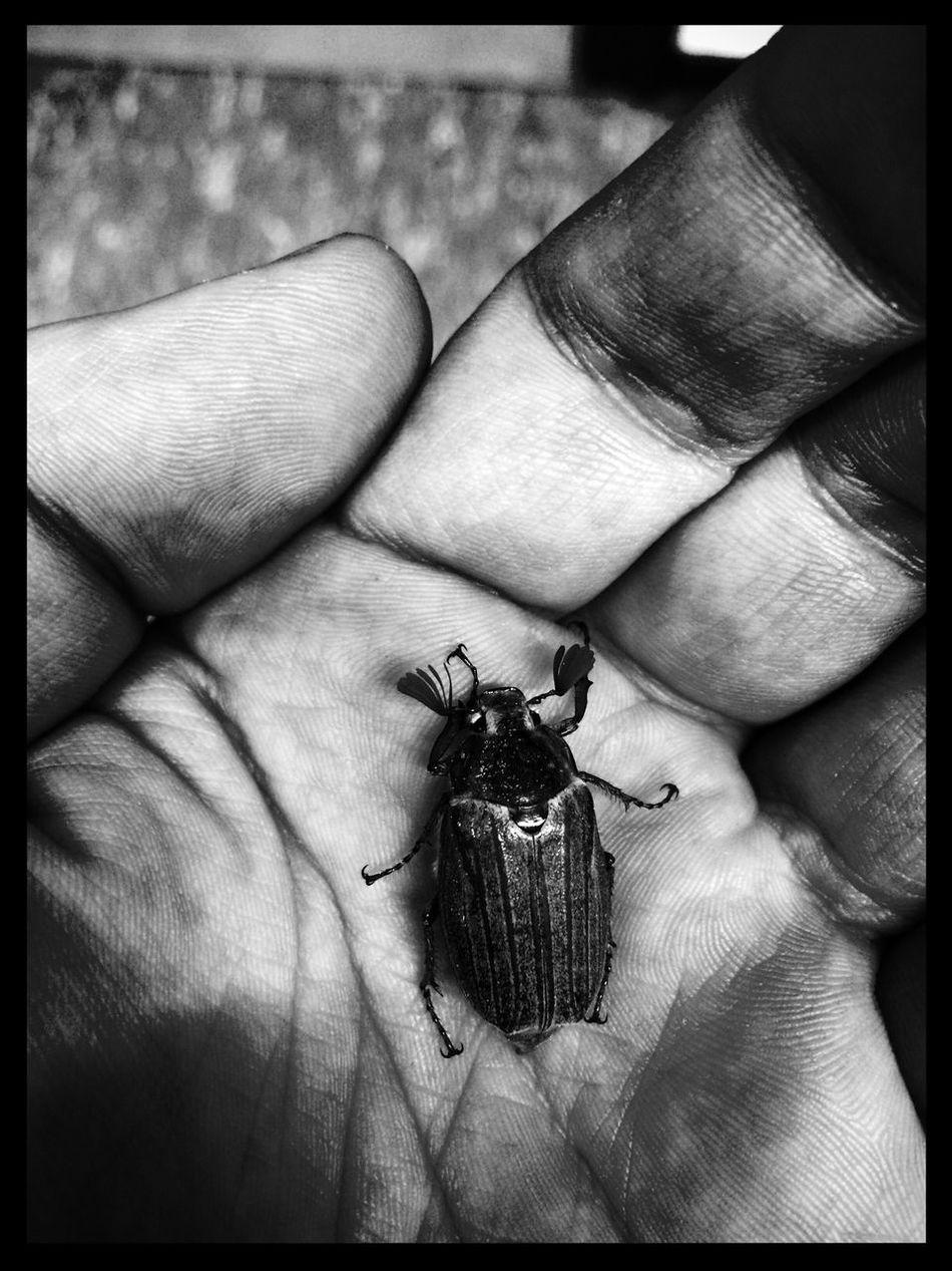 """""""Ein Käfer lag am Wegesrand, im nassen Gras, als ich ihn fand, die Beinchen steif in kalter Luft, um ihn herum apart ein Duft ... ... ich nahm ihn auf in meiner Hand, sein letztes Obdach hier auf Erden ... schließ sie ganz fest ... es knackt ein Hauch von Wärme im Chitin ... ein Hauch von Wärme ... ... ich schau ihn an und er fragt leis, was mit ihm ist und wo er sei, warum er ruht, er müsse laufen, sei doch Käfer und kein Stein ... ... warum er ruht, er müsse laufen, sei doch Käfer und kein Stein ... ... ich nahm ihn auf in meiner Hand, sein letztes Obdach hier auf Erden ... schließ sie ganz fest ... es knackt ein Hauch von Wärme im Chitin, daß kleine Herz, es schlägt nicht mehr, geht auf Reisen frei von Schmerz ... ich schau ihm nach und freu mich leis, zu seiner Reise heim ins Reich, heim ins große Rad der Käfer wo er eingeht, wird zu Stein sein Herz, ein Teil vom Rad der Käfer und ein Teil von Ewigheim, heim ins große Rad der Käfer wo er eingeht, wird zu Stein sein Herz, ein Teil vom Rad der Käfer und ein Teil von Ewigheim ..."""" - Text: Ewigheim Song: Das Rad der Käfer. Philosophie First Eyeem Photo"""