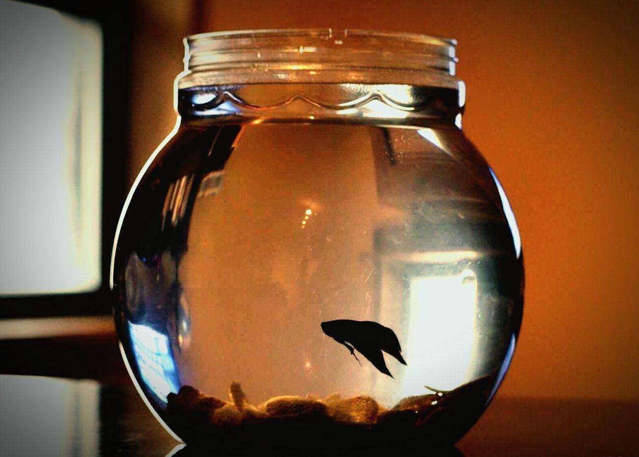 Ournewpet Fish Ryder