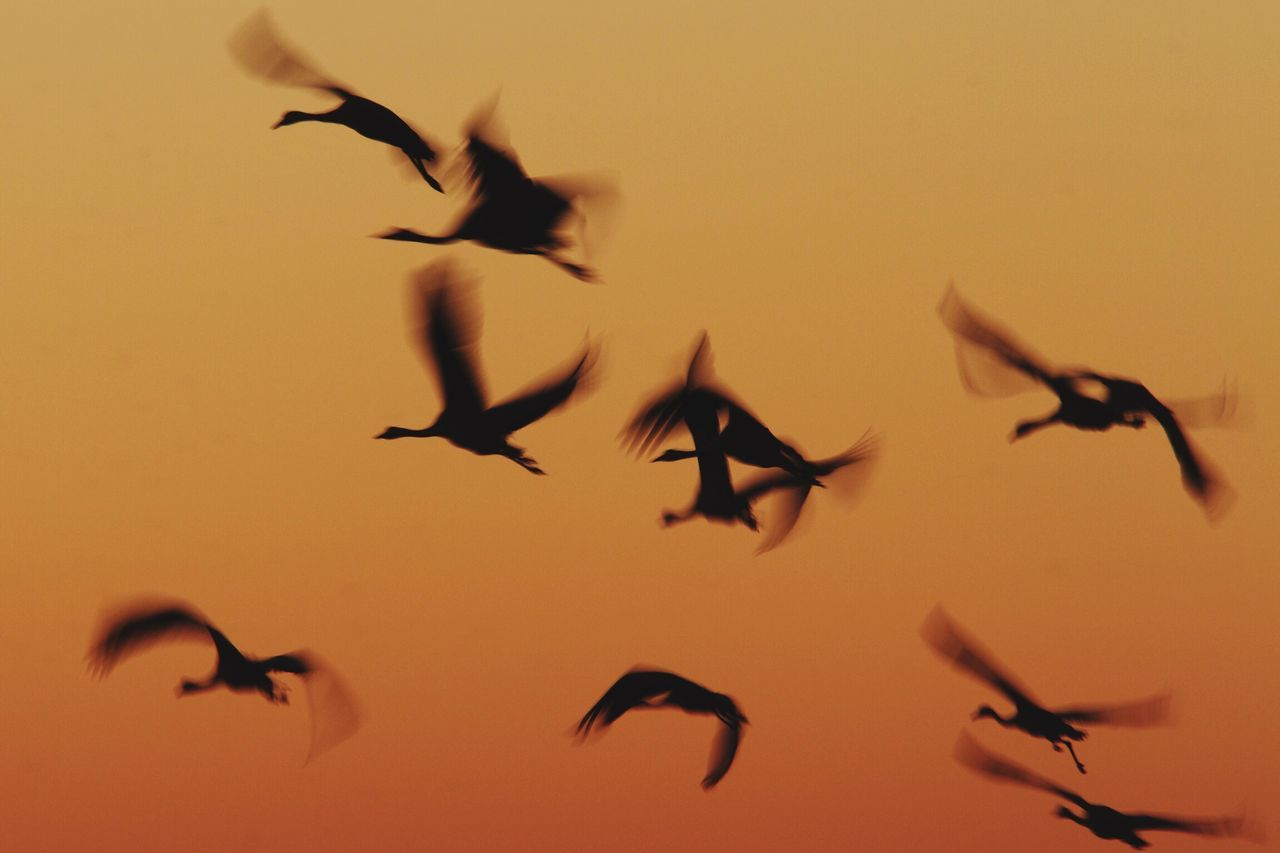 Beautiful stock photos of sky, flying, bird, animals in the wild, low angle view