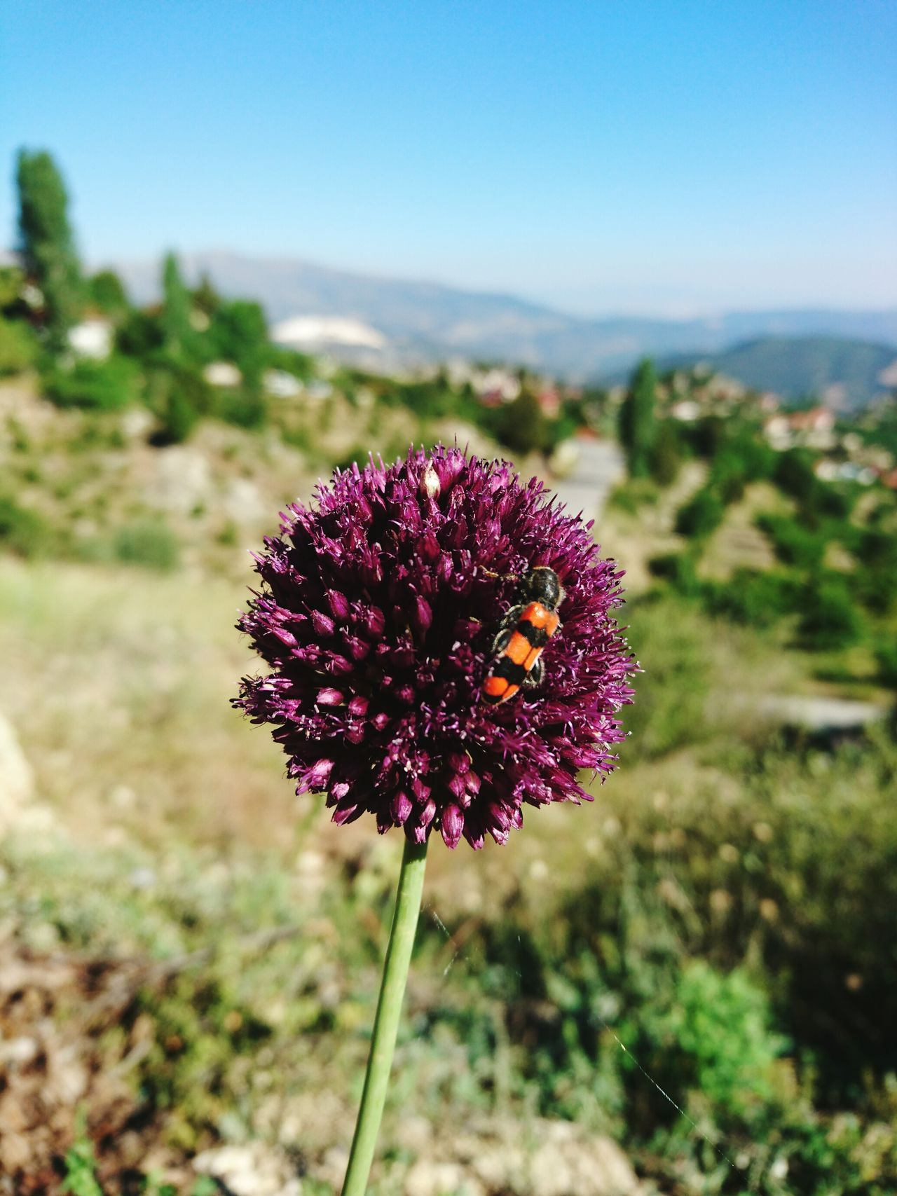 My grandfather's flower 🌸🏞 Taking Photos Enjoying Life TBT  Like4like Instadaily Instagood Eye4photography  EyeEm Nature Lover Likeforlike Eyemphotography Highland Naturelovers Flowerphotographer Flowerphotography Flowerphoto Trees And Sky Purple Insect On Flower Mountain Nature EyeEm Gallery Finding New Frontiers