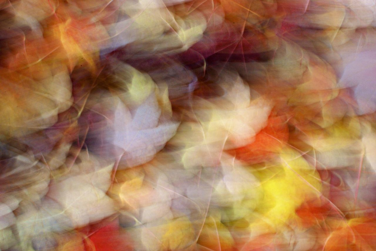 autumn leaves in an abstract view Autumn Abstract Fall Colors
