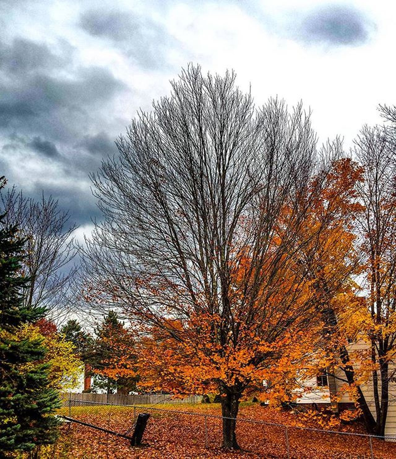 Leaf Season Clouds Cold Temperature Tree Trees Patterns Nature Orange Sky Fall In New England Fall Balance Seasons Earth