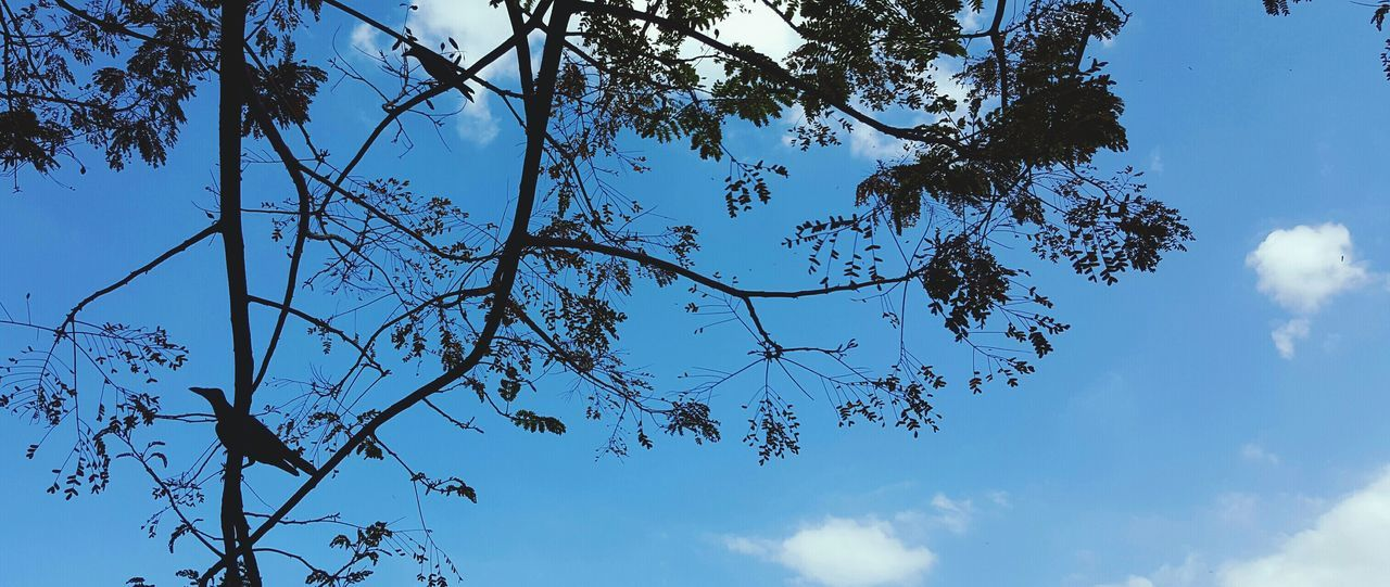 2 crows talking Crow Blue Sky Branches Talking Singing とり