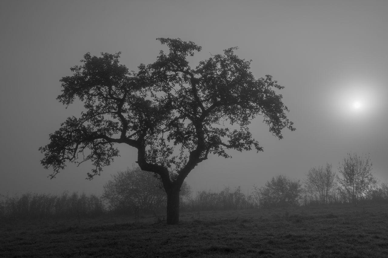 Autumn Black & White Black And White Blackandwhite Fog Foggy Lakeside Landscape Misty Misty Morning Nature No People Outdoors Schwarz & Weiß Tranquil Scene Tranquility Tree