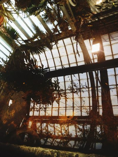 Palmhuset