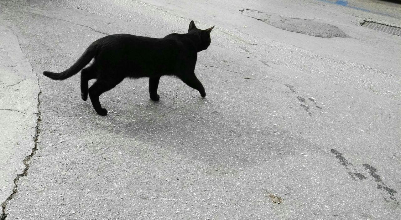 Animal Themes One Animal High Angle View Mammal No People Domestic Animals Outdoors Day Pets Nature Cat Black Cat Black Cats Are Beautiful